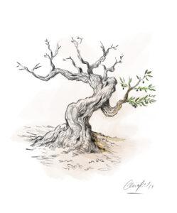 Olivo | IDU Ilustración